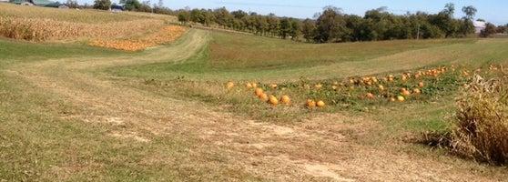 Two Sisters Pumpkin Patch - Farm in Mount Sterling