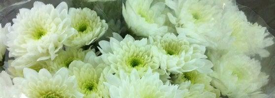 Цветы оптом киев салютная — img 13