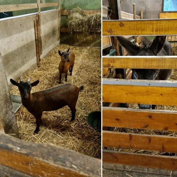 kinderboerderij rekerhout