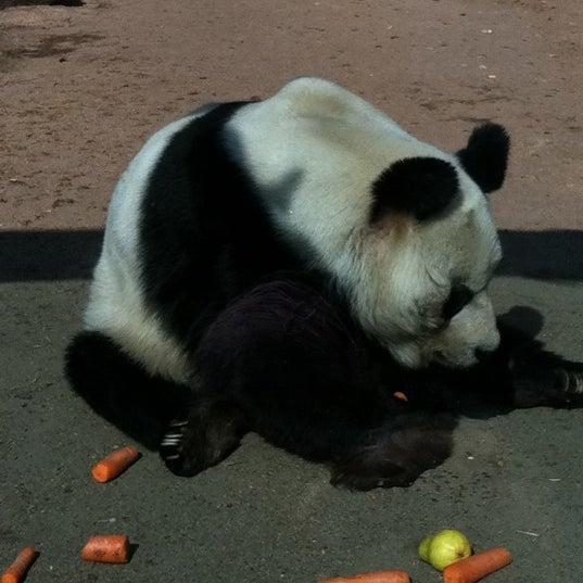 3/17/2012에 Anne S.님이 Zoologischer Garten Berlin에서 찍은 사진