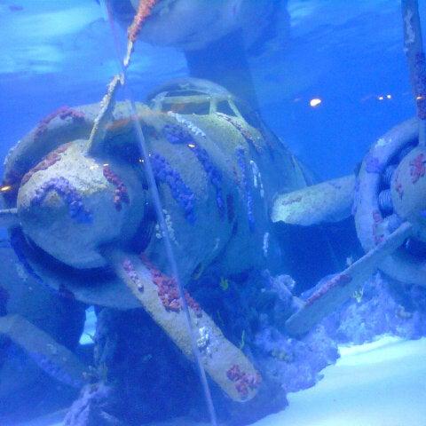 Das Foto wurde bei Antalya Aquarium von Koray S. am 8/20/2012 aufgenommen