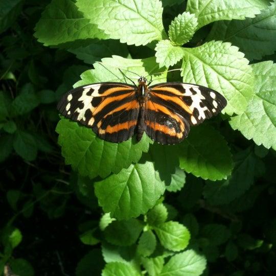 Foto scattata a Houston Museum of Natural Science da Coy G. il 6/5/2012