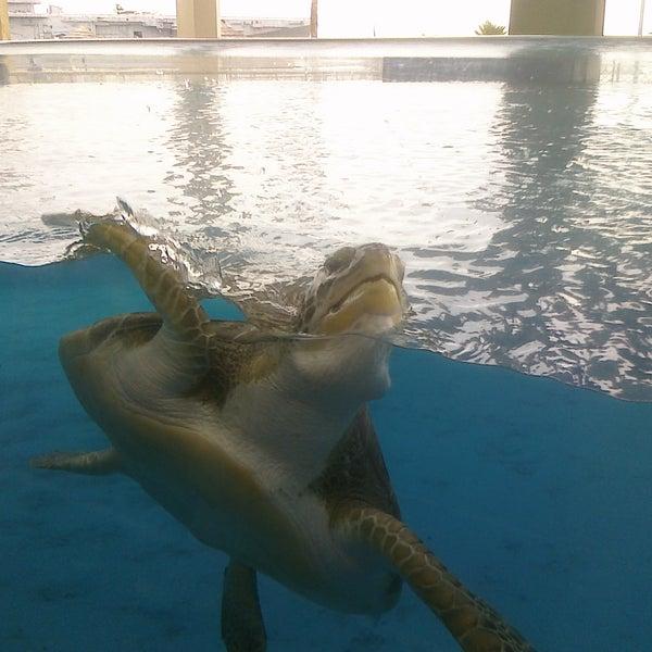 2/19/2011 tarihinde Blake C.ziyaretçi tarafından Texas State Aquarium'de çekilen fotoğraf