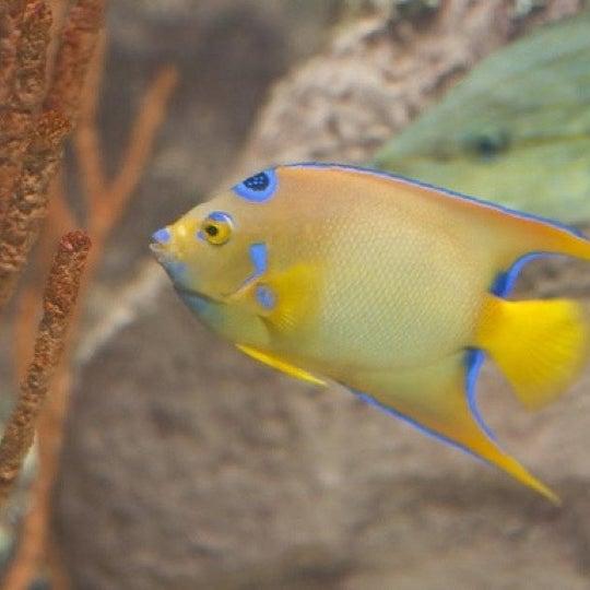7/19/2011にMatthew W.がTexas State Aquariumで撮った写真