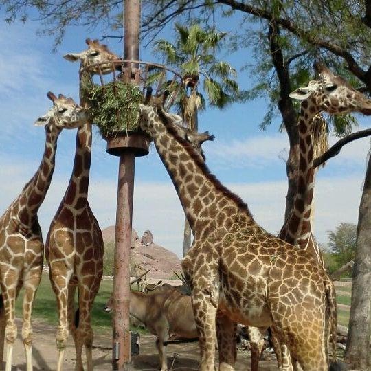 Снимок сделан в Phoenix Zoo пользователем Frankie F. 4/14/2012