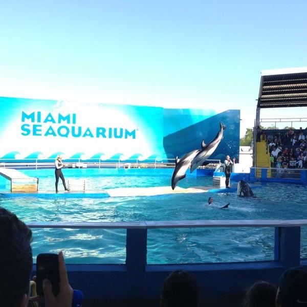 Foto scattata a Miami Seaquarium da Pufi C. il 3/27/2013