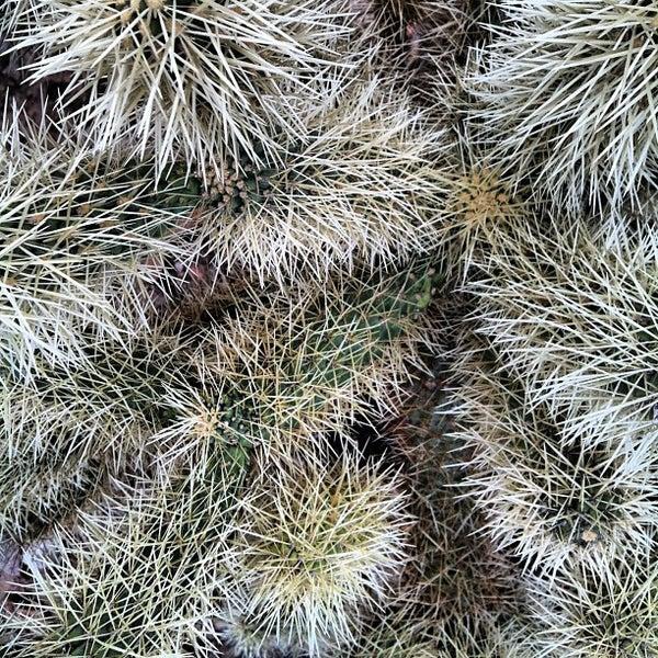 รูปภาพถ่ายที่ Taliesin West โดย Doris S. เมื่อ 12/31/2012