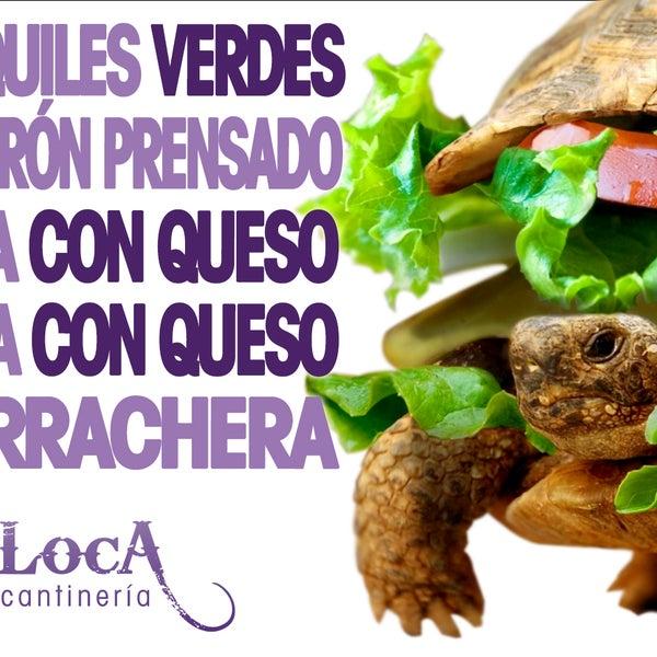 Algunas de nuestras YA famosas Tortugas!!