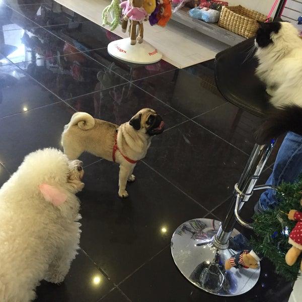 vk pet chico tienda de mascotas en chic lago. Black Bedroom Furniture Sets. Home Design Ideas