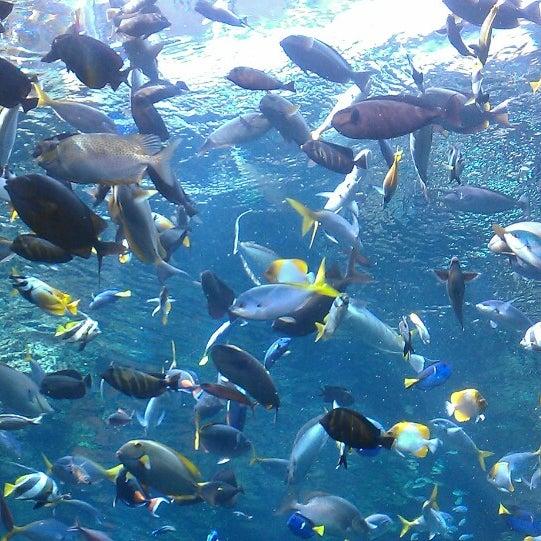 รูปภาพถ่ายที่ California Academy of Sciences โดย Lauren V. เมื่อ 5/9/2013