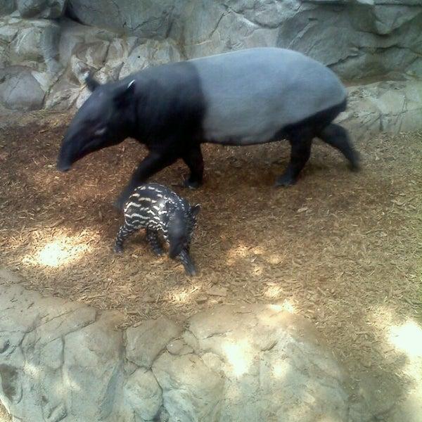 8/24/2013 tarihinde Christina P.ziyaretçi tarafından Minnesota Zoo'de çekilen fotoğraf