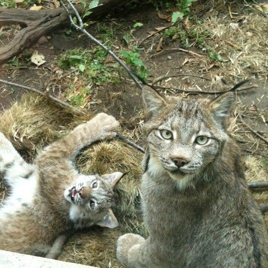 9/29/2012 tarihinde Jonathanziyaretçi tarafından Minnesota Zoo'de çekilen fotoğraf
