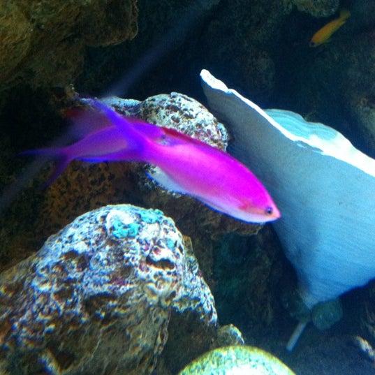 9/23/2012에 Joey D.님이 Aquarium of the Pacific에서 찍은 사진
