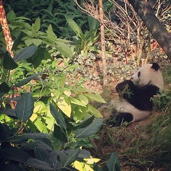 Foto diambil di Singapore Zoo oleh Farhan H. pada 11/10/2012