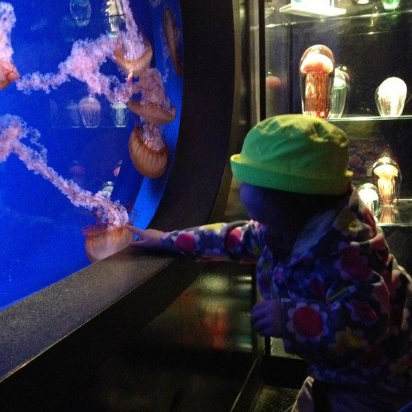 Foto diambil di SEA LIFE Minnesota Aquarium oleh Jeremy G. pada 4/4/2013