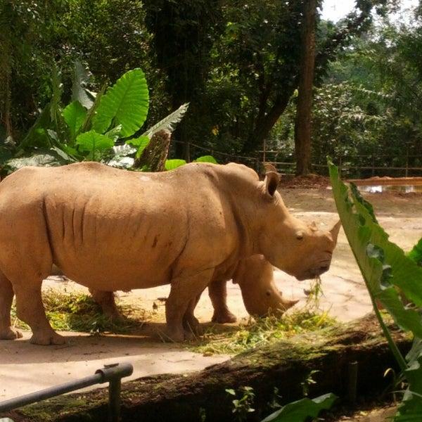 Foto diambil di Singapore Zoo oleh Andrii A. pada 4/17/2013