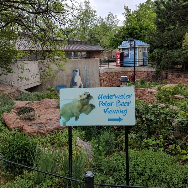 Polar Bears At Denver Zoo