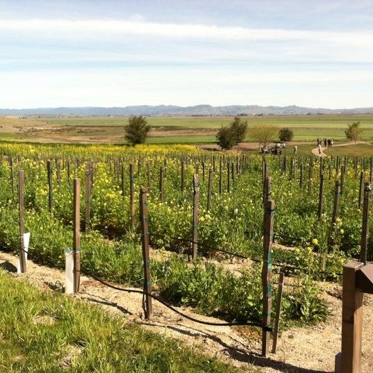 Photo taken at Ram's Gate Winery by Ana T. on 2/24/2013