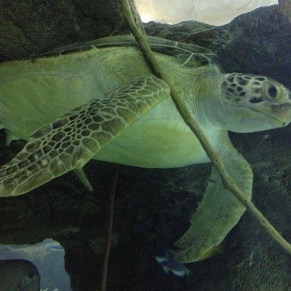 2/28/2013에 Kurt M.님이 SEA LIFE Minnesota Aquarium에서 찍은 사진
