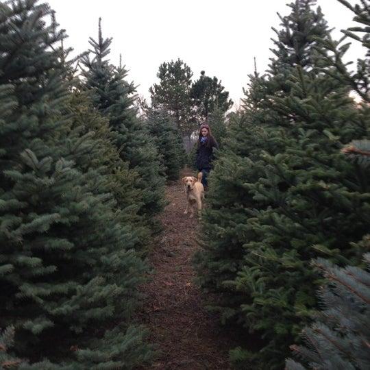 Photo taken at Addison Oaks Christmas Tree Farm by Christine G. on 12/1 - Photos At Addison Oaks Christmas Tree Farm - 355 Lake George Rd