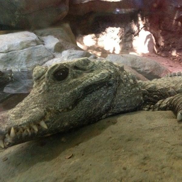 7/23/2013 tarihinde Jimmy V.ziyaretçi tarafından Minnesota Zoo'de çekilen fotoğraf