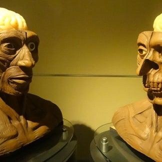 รูปภาพถ่ายที่ Universum, Museo de las Ciencias โดย Juristas UNAM เมื่อ 10/9/2012