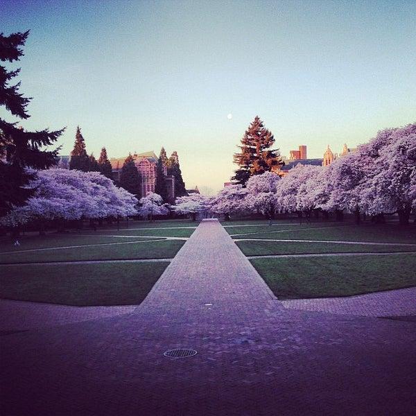university of washington quad winter