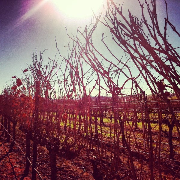 Foto scattata a Firestone Vineyard & Winery da Angela S. il 1/3/2013