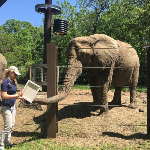 Photos at Okavango Elephant Sanctuary - Swope Park - Kansas