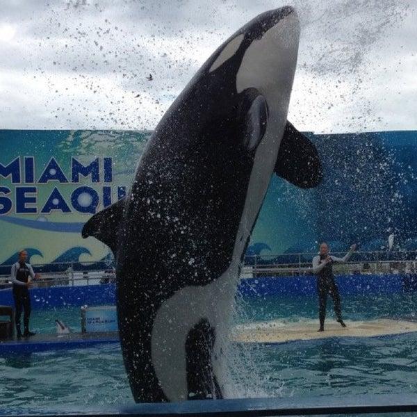 Foto scattata a Miami Seaquarium da Erika ~🐶~ il 3/26/2013