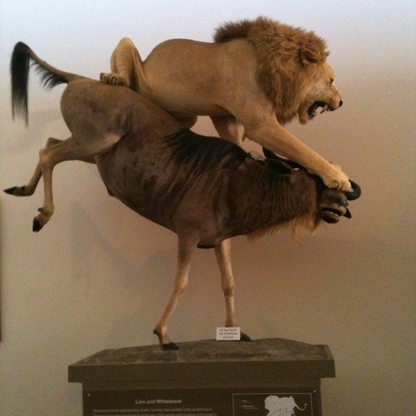 Foto tirada no(a) Las Vegas Natural History Museum por Alex K. em 1/20/2013