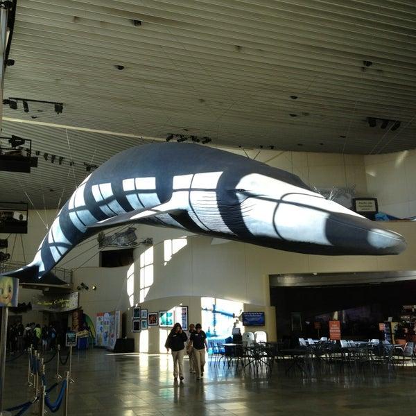 Das Foto wurde bei Aquarium of the Pacific von Alex K. am 3/11/2013 aufgenommen
