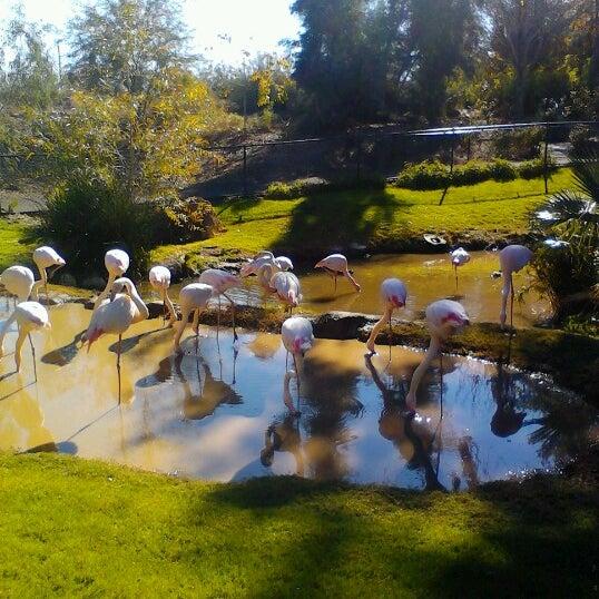 Снимок сделан в Phoenix Zoo пользователем Cindy C. 12/17/2012