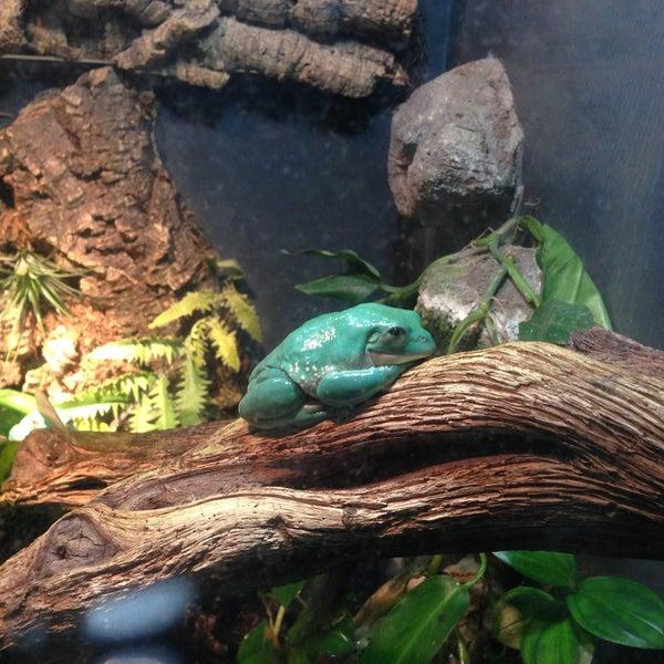 4/21/2013 tarihinde Melissa G.ziyaretçi tarafından Texas State Aquarium'de çekilen fotoğraf