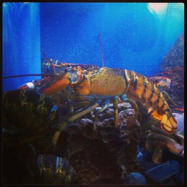 Das Foto wurde bei Fish Story von Skeeter's T. am 1/13/2013 aufgenommen