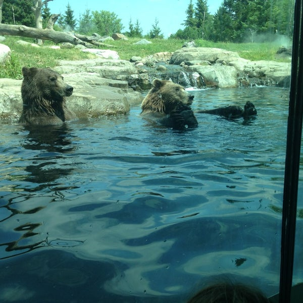 7/20/2013 tarihinde Todd B.ziyaretçi tarafından Minnesota Zoo'de çekilen fotoğraf