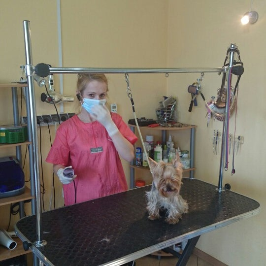 Photos At Psi Fason Pet Service In Białystok