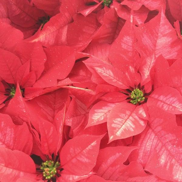 Foto tirada no(a) Nick's Garden Center & Farm Market por Leslie C. em 12/22/2012