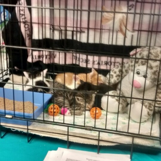 Photos at Worcester Animal Rescue League - Animal Shelter in