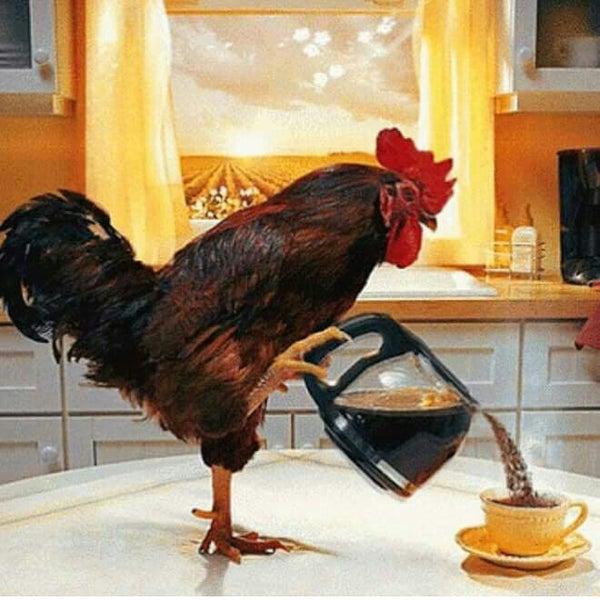Картинки доброе утро с курицей прикольные, байрам анимационные