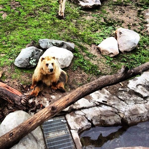 5/23/2013 tarihinde Steven P.ziyaretçi tarafından Minnesota Zoo'de çekilen fotoğraf