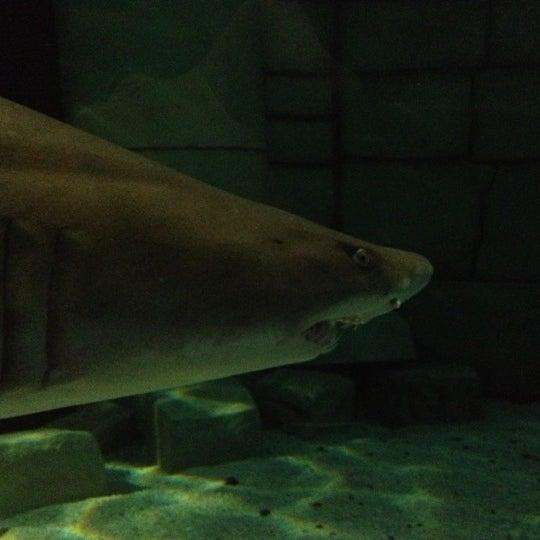 12/9/2012에 Janus K.님이 SEA LIFE Minnesota Aquarium에서 찍은 사진