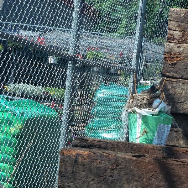Busy beaver new kensington