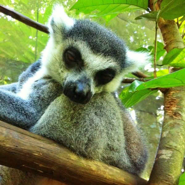 Foto diambil di Singapore Zoo oleh Ivan B. pada 4/30/2013