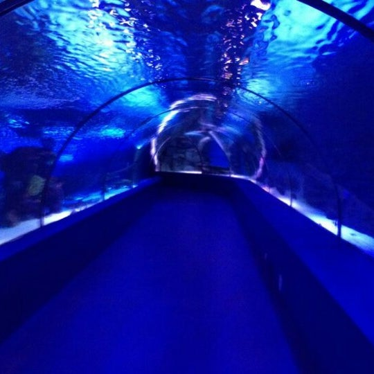 1/5/2013にMuazzez T.がAntalya Aquariumで撮った写真