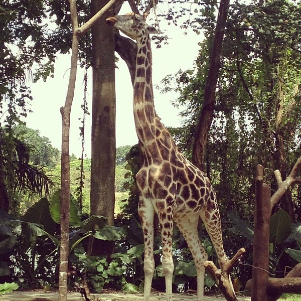 Foto tirada no(a) Singapore Zoo por Jade R. em 4/1/2013