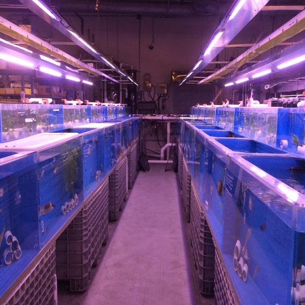Photos at Aquatic Warehouse - Kearny Mesa - 2 tips from 218