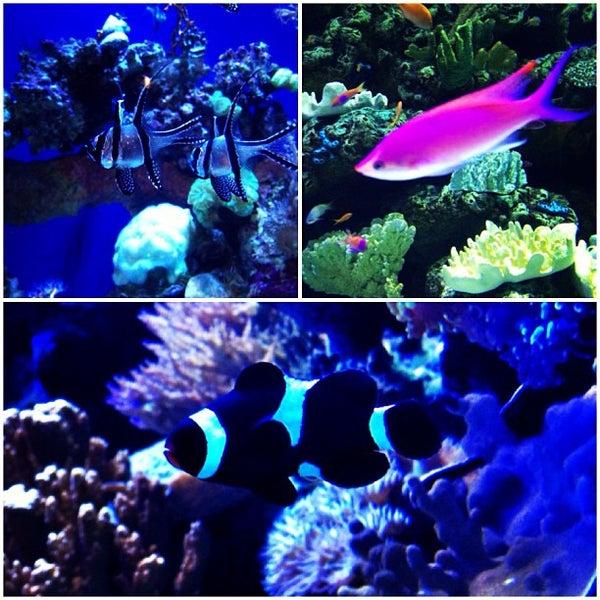 Das Foto wurde bei Aquarium of the Pacific von Cari am 6/2/2013 aufgenommen