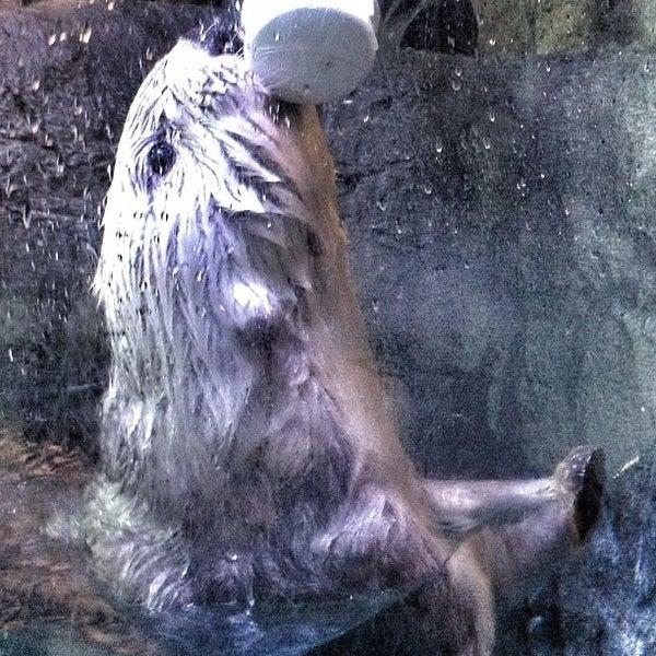Das Foto wurde bei Aquarium of the Pacific von Cari am 6/1/2013 aufgenommen