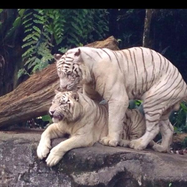 Foto tirada no(a) Singapore Zoo por Mhmtali em 11/14/2013